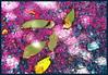 La mas Linda (italianoadoravel .BACK ,,,,,,,,,,,,) Tags: sky flower window southamerica sunrise landscape colorful sweden retrato vivid doorway stunning salvador litoral soe topic potions orangeandblue singintheblues tinctures supershot 5photosaday passionphotography golddragon abigfave platinumphoto impressedbeauty superbmasterpiece travelerphotos diamondclassphotographer flickrdiamond megashot ysplix excellentphotographerawards superlativas theunforgettablepictures onlythebestare wonderfulworldmix coloursplosion goldstaraward clevercreativecaptures landscapesdreams unlimitedphotos worldtrekker multimegashot overtheshot llovemypics flickrlovers peachofashot top20travelpix