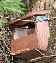Robin Nest Box Mk2