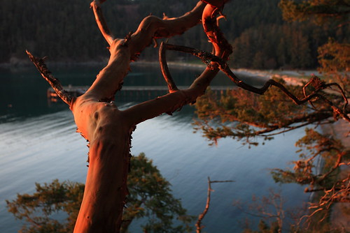 Deception Pass: Flaming branch