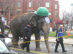 Leading the St. Patrick's parade