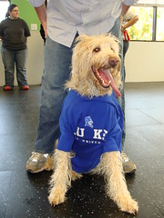 Murphy for Duke