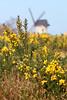 Lazy Picnic (outside the camp) Tags: blur windmill sunshine yellow birkenhead gorse ididthis bidstonhill bidstonwindmill