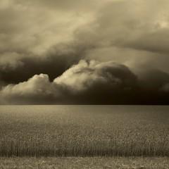 Sequel (Olli Kekäläinen) Tags: sky bw field clouds photoshop dark square landscape nikon scenery 2009 d300 palabra themoulinrouge 500x500 ok6 ollik 20090324