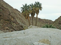 Anza Borrengo Desert Park