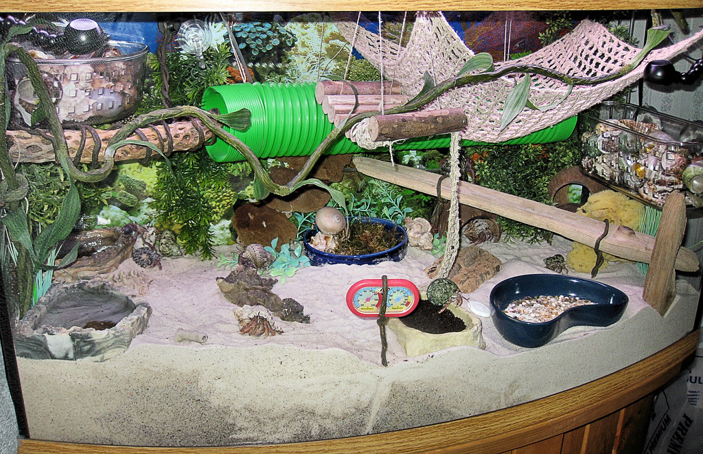 The World S Best Photos Of Crabitat And Habitat Flickr Hive Mind
