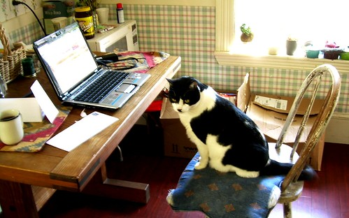 Trouble's Home Office