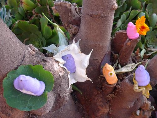 Flower Peeps