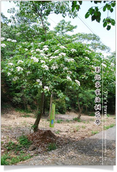 桐花祭賞花步道-挑水古道賞桐花19