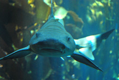 shark-04