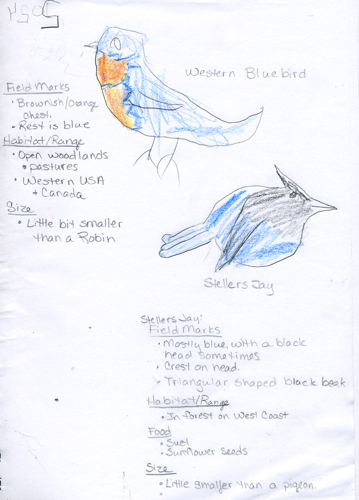 Stellers Jay and Western Bluebird Nature Journal -- JD Boy age 6