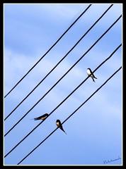 La Mi Sol (Patataasada) Tags: blue sky music naturaleza bird sol nature animal animals azul mi la cables ave cielo animales notas electricidad 1001nights música avión pájaro golondrinas nota golondrina pentagrama blueribbonwinner partitura melodía platinumheartaward a3b a3bchallenge flickrestrellas quarzoespecial pantagrama