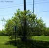 Tree Consuming Poll (Kyle_KWC) Tags: sky tree leaves cool poll kwc awesometrees