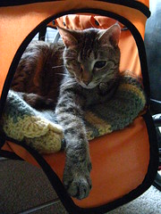 Maggie hanging out in the stroller