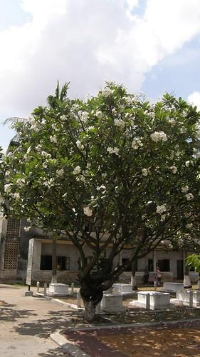 020.監獄博物館內盛開的樹
