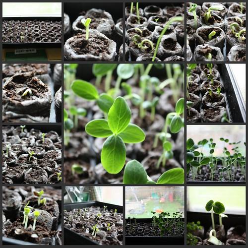 Inside Seedlings