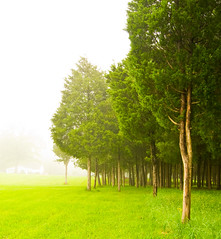 Trees In The Mist I (Leo Druker) Tags: trees mist tree green nature fog forest virginia spring farm foggy vivid wideangle tokina1224 evergreen civilwar manassas battlefield foggymorning d300 manassasbattlefield civilwarmemorial manassasbattlefieldpark