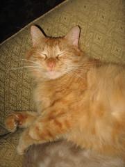 Ziggy sweet eyes (christie210) Tags: cats cat kitty kitties sweeteyes orangekitty