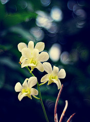 Felawers is Flowers (DELLipo) Tags: orchid flower photoshop nikon dof bokeh explore orkid d80 hdellr dellipo