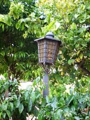 Fiat lux (maryateresa2001) Tags: verde green lamp mtd foglie garden giardino verzura samremo lampionr maryateresa