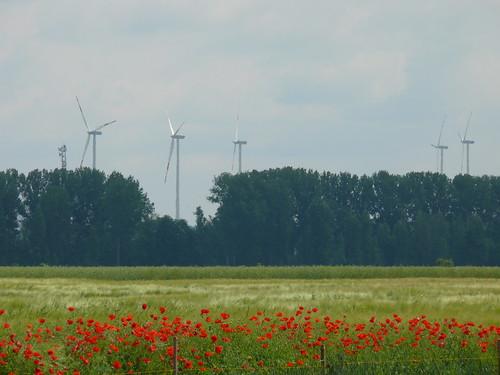 Mohn- und Windkraft