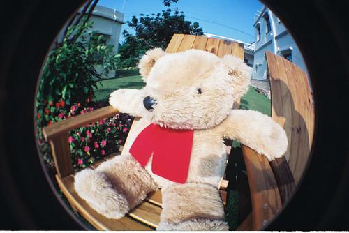 曬太陽的熊