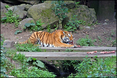 Ouwehands 1 (c.oosterbos) Tags: animal zoo rhenen ouwehands