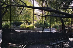bakom galler (KarlJohan) Tags: zoo aquarium bur sweden stockholm lemur skansen träd karljohan djurgården akvarium randig galler lemurcatta svans ringsvansmaki halvapa kattalemurer