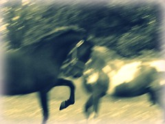 Boss and Mindy Dancing (Lucy P.) Tags: boss horses horse motion love paint mare chestnut breed stallion pinto