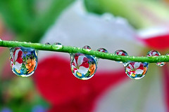 "Grand Opening: new ""water drop bouquet&qu..."