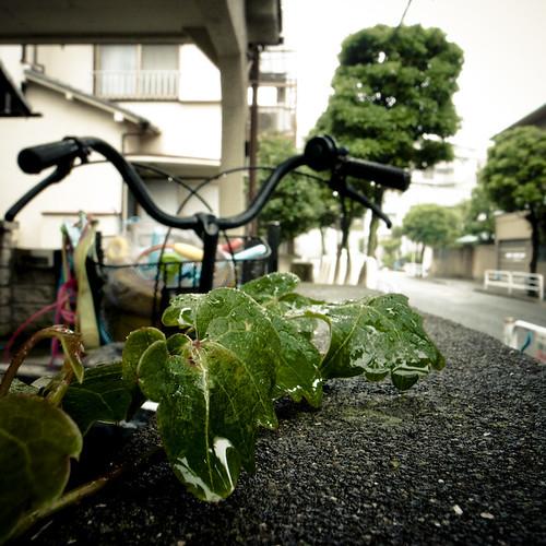 Ivy, Handlebars, Rain
