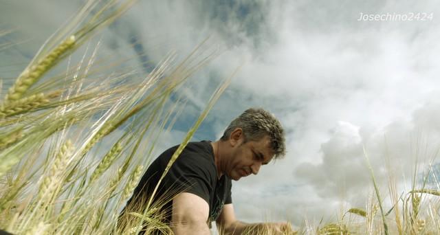 Entre espigas de trigo