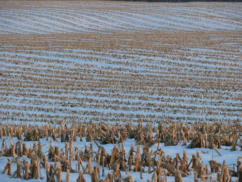 The Farm, Christmas 2008