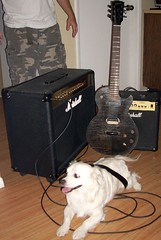 Cyd's 2 Gibsons (aym_creations) Tags: dog guitar marshall gibsons