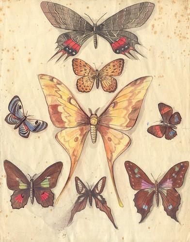 aqua papillons