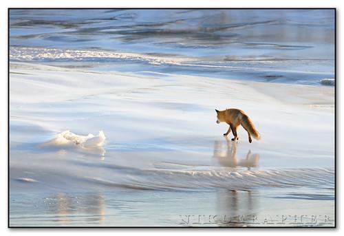Foxscape
