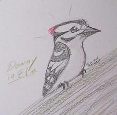 3.16.09 - Male Downy Woodpecker sketch