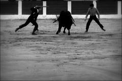 (Juampa Mola) Tags: españa festival spain andalucia linares toros toro flamenco jaén tauromaquia riveraordoñez banderillas ruedo taurino elfandi proyectohombre