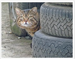 Tiggy disturbing at work - changing tires