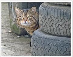 Tiggy disturbing at work - changing tires