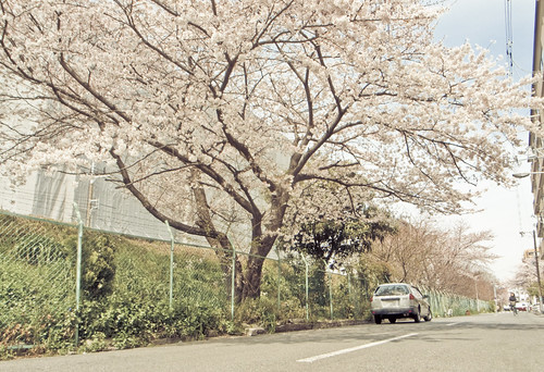 R0014827 : Sakura2009 #18
