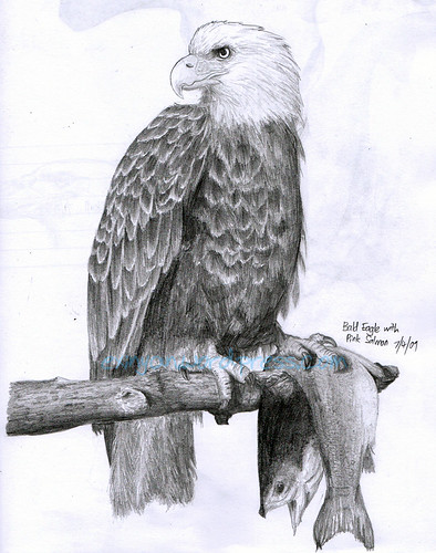 Bald Eagle Pencil Drawing  Eagle Head Pencil Drawing Easy