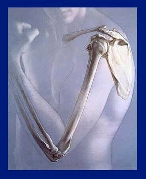 ossos do braço