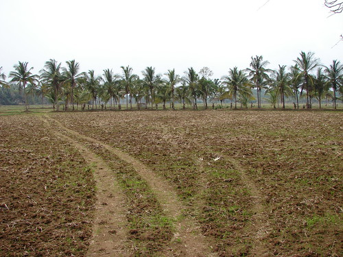 Palakkadan paddy fields