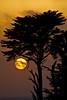 Golden Sunset. (Blaze Williams) Tags: sunset orange sun moon tree beach sony blaze goldensunset halfmoonbay soe selectfew sonyalpha flickrhearts superhearts platinumheartaward sonya200 fromheartawardsgroup photographersworld theclassact comefromlandandsea blazewilliams