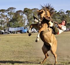 peña 1 (tucul_photo) Tags: horses horse criollo caballo cheval caballos domador country campo mustang jinete cavalli cavalo gauchos horseback chevaux gaucho doma dorrego gaúcho jineteada