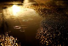I love rain. . . (Kelly West Mars) Tags: road street black wet water rain glitter shower gold virginia droplets drops spring bokeh sparkle ripples puddles richmondva nikond80