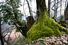 CD_Cadero_090404_36 (chrigistan) Tags: fr frühling imwald frhling