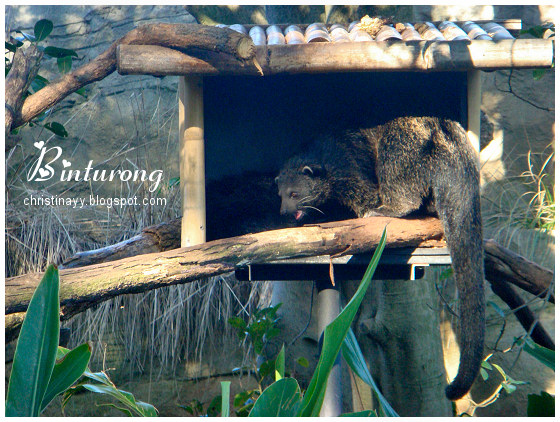 Graduation Trip: Taronga Zoo Sydney