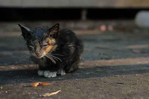 pity meow~