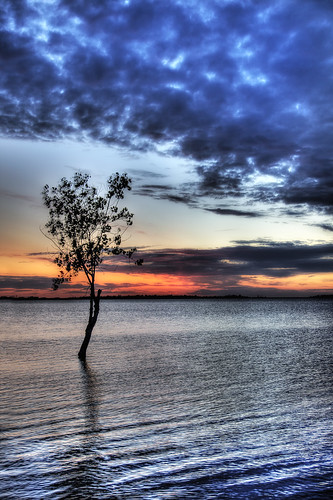 Folsom Lake tree at Sunset